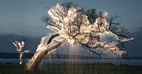 light drips from trees in exposure photos by vitor