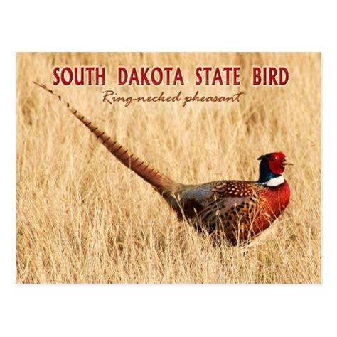 state bird of south dakota south dakota state bird ring necked pheasant zazzle