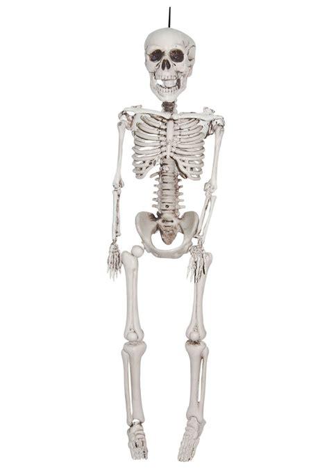 a skeleton 12 inch plastic realistic skeleton