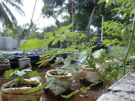organic micro farm and vegetable terrace garden
