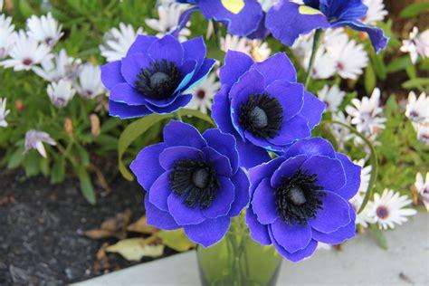 of flowers beautiful anemone flower weneedfun