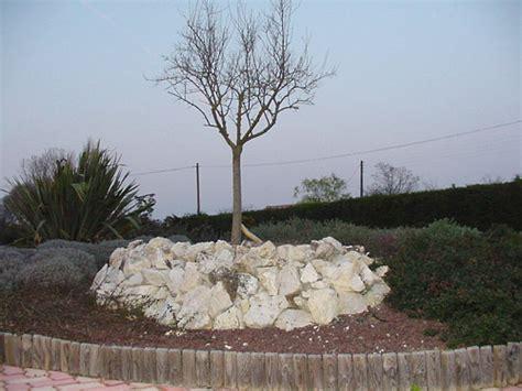olivier en pot perd ses feuilles 28 images mon ficus perd ses feuilles jardizone l olivier