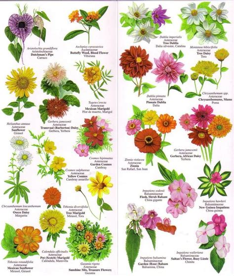 list of garden flowers with pictures flower names weneedfun