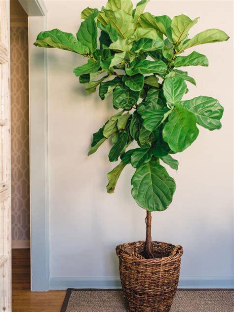 house for plants houseplants guide hgtv