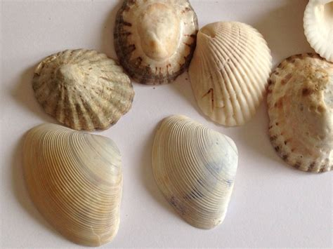 shell craft for shells shell craft ideas shell craft projects for