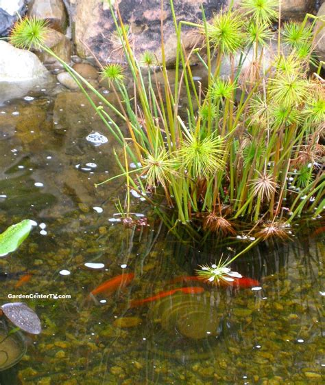 lowes garden center flowers triyae backyard fish pond in the philippines