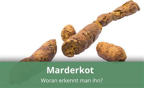Wie Sieht Der Garten Aus by Woran Erkennt Marderkot 187 Infos Tipps
