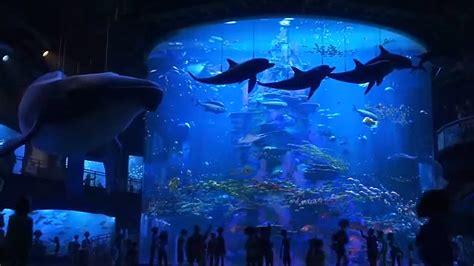 top 5 n 176 763 les aquariums allocin 233