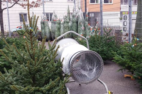 wo weihnachtsbaum kaufen weihnachtsbaum kaufen piqza de