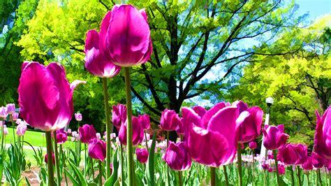 green garden flowers luminous purple tulips in a flower garden and green