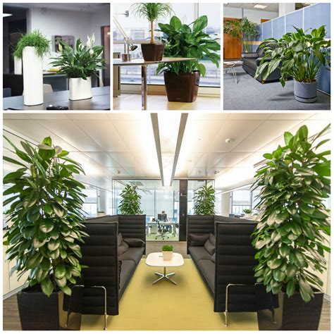 plants for the office plants suitable for office