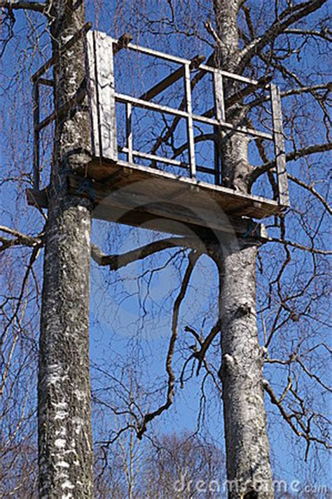 white tree stand tree stand in birch trees royalty free stock images