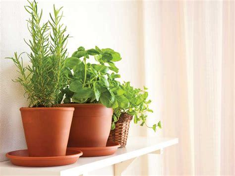herb garden indoors most popular herb garden indoors collection homes
