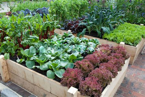the vegetable garden 7 gorgeous raised bed vegetable gardens grid world