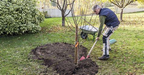 Garten Gestalten Obstbäume by Obstb 228 Ume Richtig Pflanzen Schritt F 252 R Schritt Mein