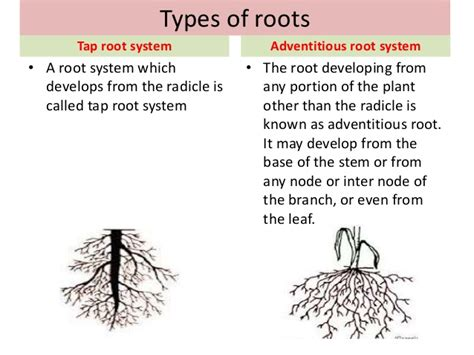 Modification Of Root by Root And Its Modifications