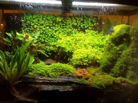 tree set up 1000 ideas about frog terrarium on fish tank