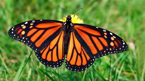 of a butterfly butterfly meaning and interpretations stop