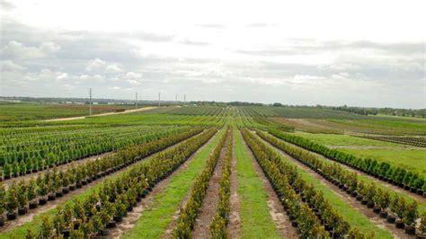 lake tree farm meet florida s new crop of agricultural environmental