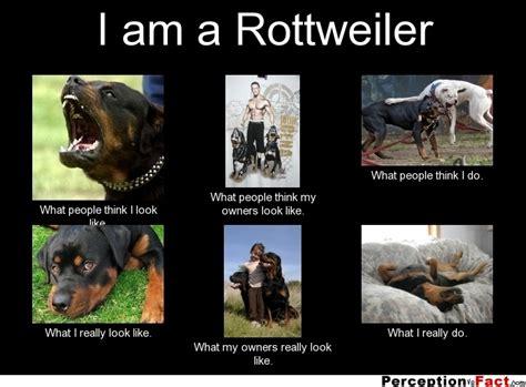 i am a i am a rottweiler what think i do what i