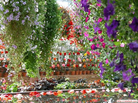 gardens with flowers garden flowers wallpaper decorating clear
