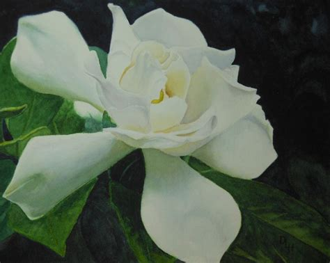 Gardenia Watercolor 206 Best Images About Flowers Gardenia On