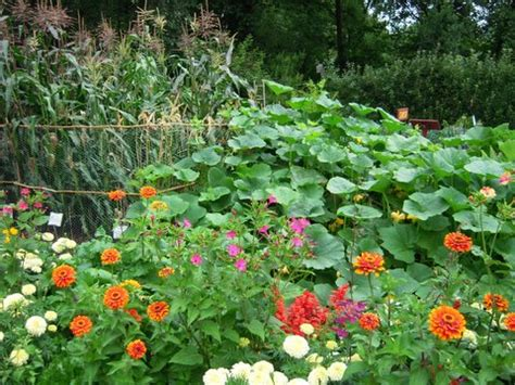 companion flowers for vegetable garden reflections in raindrops the inane witterings of a