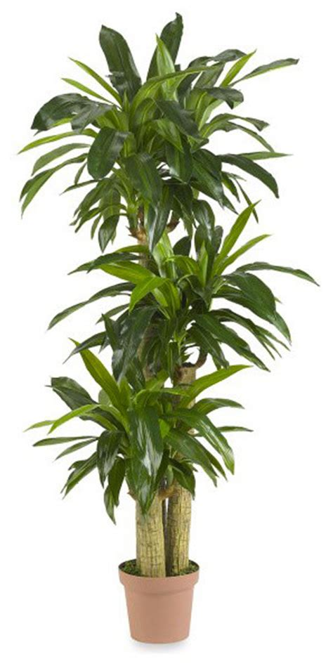 traditional plants nearly real touch indoor outdoor tropical silk
