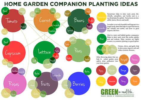 companion gardening layout green in real ideas for the home garden companion