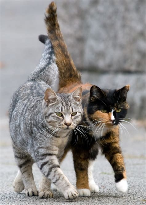 alley cat alley cat allies partners with humane alliance to