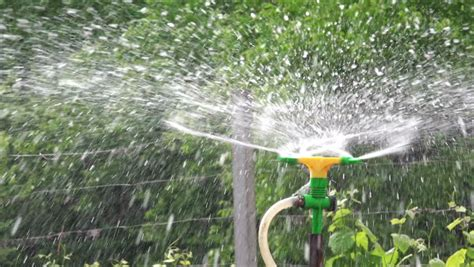watering vegetable garden with sprinklers irrigation water flowing from plastic pipe used for
