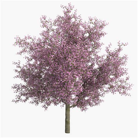cherry tree vs cherry blossom tree cherry tree 3d c4d