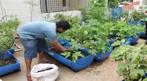terrace gardening plant care in organic terrace gardening biological