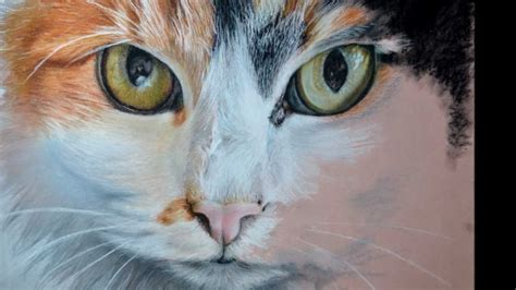 Pansy Cat Painting Drawing In Pastel Step By Step