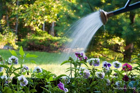 when to water vegetable garden when is the best time to water the vegetable garden