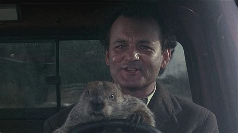 groundhog day hd groundhog day wallpapers wallpaper cave