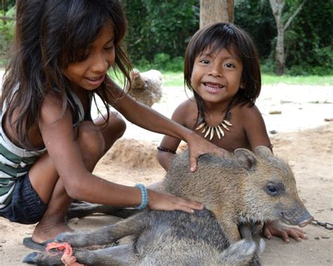 giving the amazon rainforest back to the awa tribe bbc news