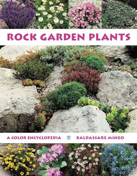 best plants for rock gardens rock garden plants a color encyclopedia from timber press