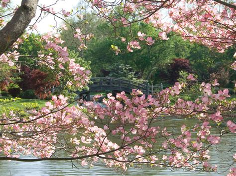 10 places to see cherry blossoms in the u s besides d c photos cond 233 nast traveler