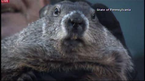 groundhog day live 2016 pennsylvania groundhog predicts early