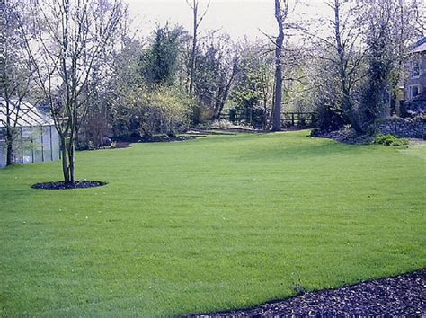 neglected garden lawn in guildford surrey cherry tree services