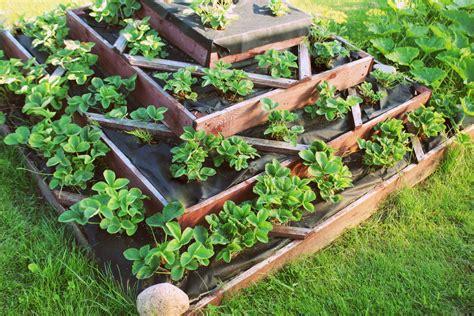 Der Pflegeleichte Garten by Garten Pflegeleicht Gestalten 187 Praktische Ideen Tipps