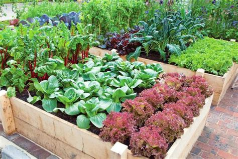 tips for planting a vegetable garden productive vegetable gardening tips for beginners