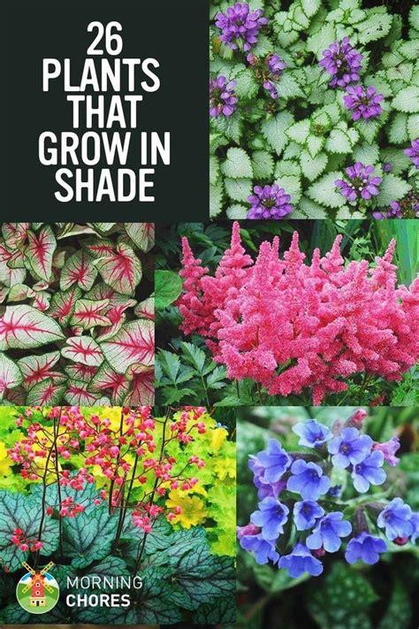flowers for the garden ideas 25 best ideas about shade garden on shade