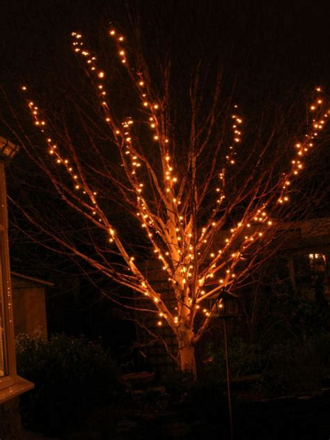 lights on outside trees decoration ideas gorgeous branches tree and