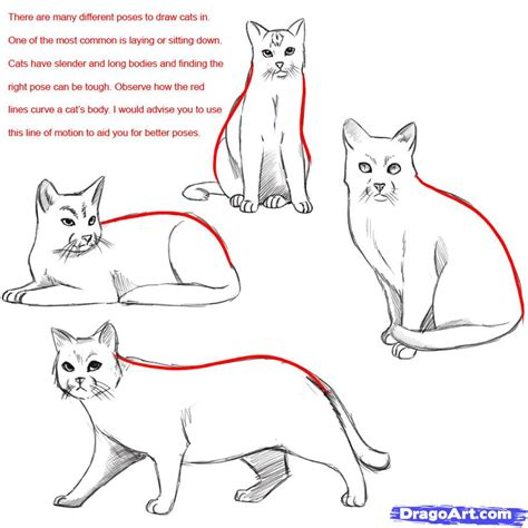 cat step step how to draw a realistic cat draw real cat step by step