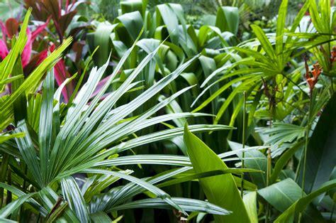 how to create a flower garden how to create a tropical garden flower power