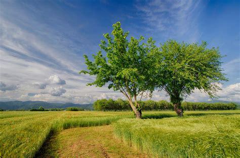 Der Blühende Garten by Die 61 Besten Sch 246 Ne Hintergrundbilder Der Natur Und Des
