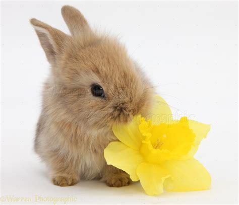 flower and bunny бацзы фэншуй ци мень дун цзя выбор дат бацзы