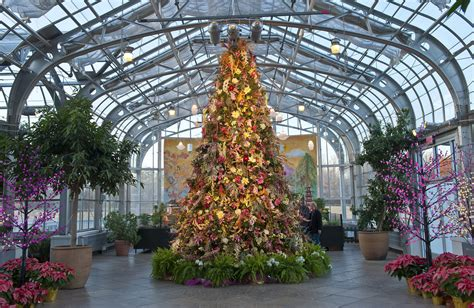 lewis botanical gardens top 5 tips for tree trimming lewis ginter